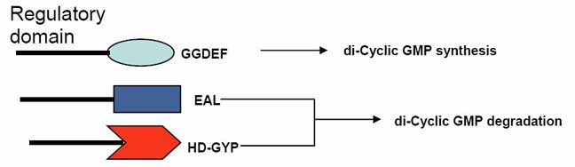 Di-cylcic gmp as intracellular signaling molecule in plant pathogens